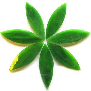 LMG0023 Spanish Moss